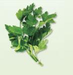 Irresistible Herbs - Parsley